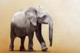 Martin Aveling - African Elephant