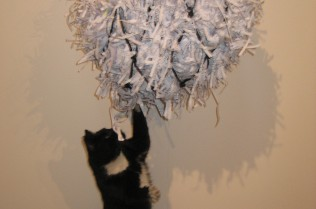 The stray cat playing with 'Nets'