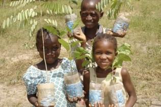 Tree aid in Mali