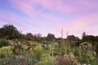 Sweet Peas and Onions in Summer Twilight