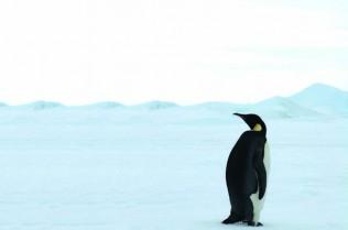 polarcruises-penguin2
