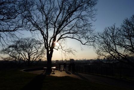 GreenwichPark_OneTreeHill