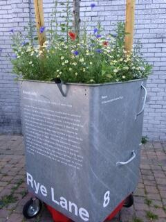 Rye Lane is Blooming!