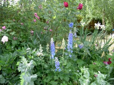 Garden June 2010 016
