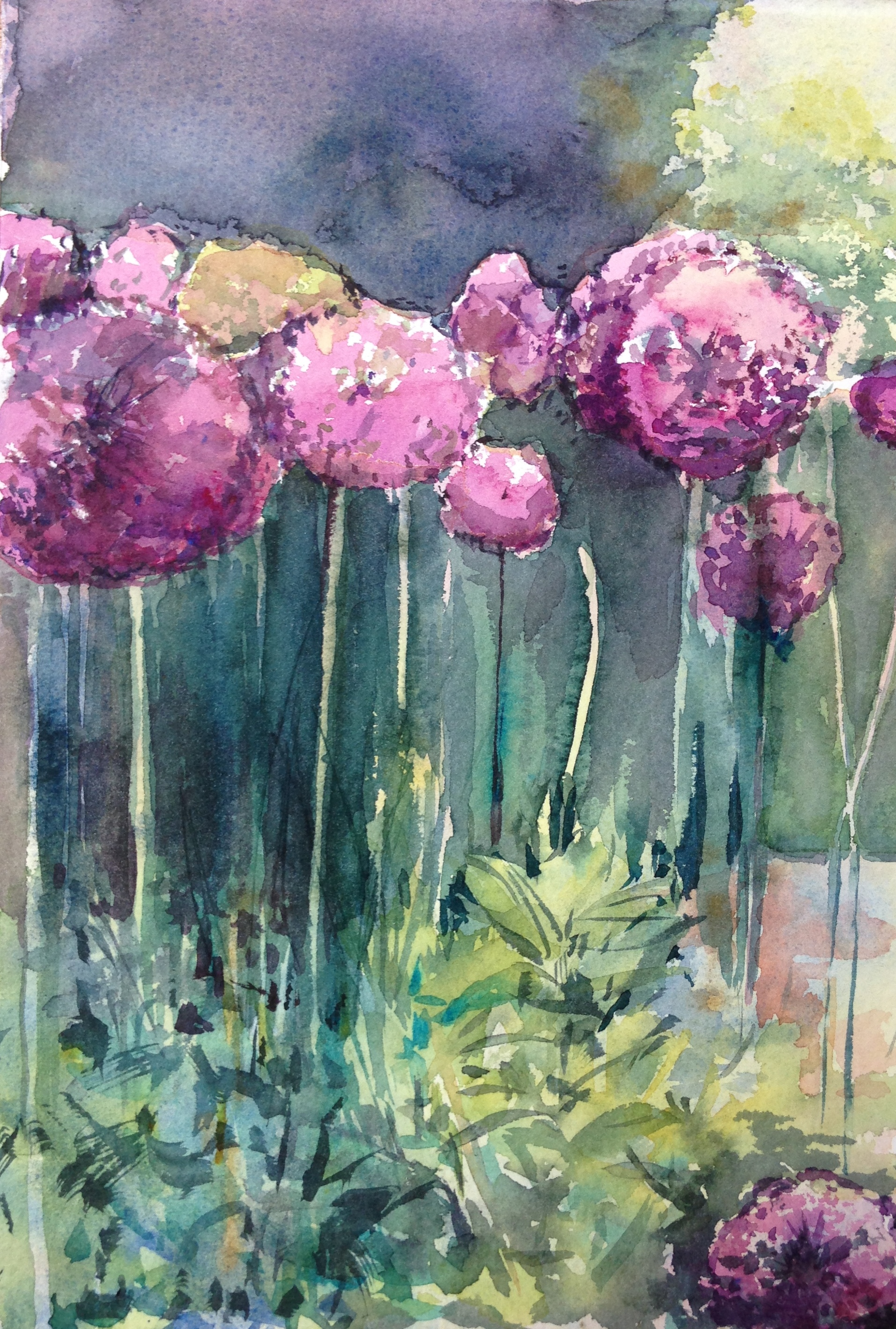 Alliums by Morna