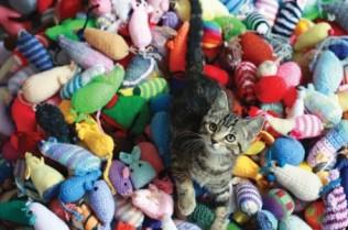 knittin kittens