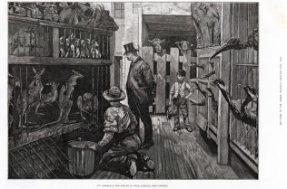 The Collector inspecting some new supplies! London Illustrated News