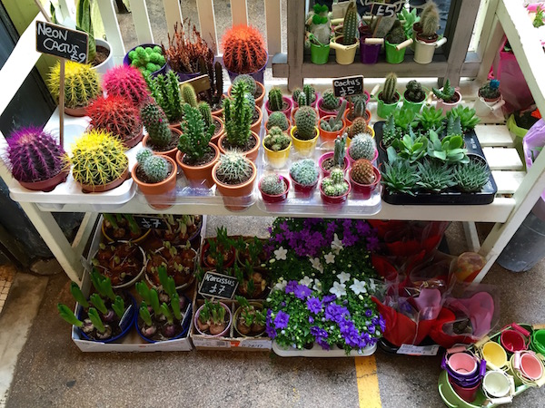 Colorful cacti on sale at Brixton Village.