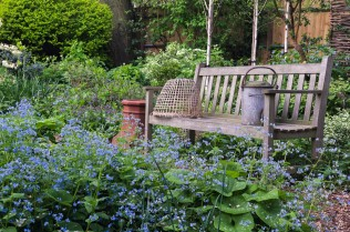 Seen over froth of blue Brunnera macrophylla Langtrees, bench sits in shade of birches beside bed of pulmonaria, camassia, lamium, cow parsley, comfrey, hellebore.
