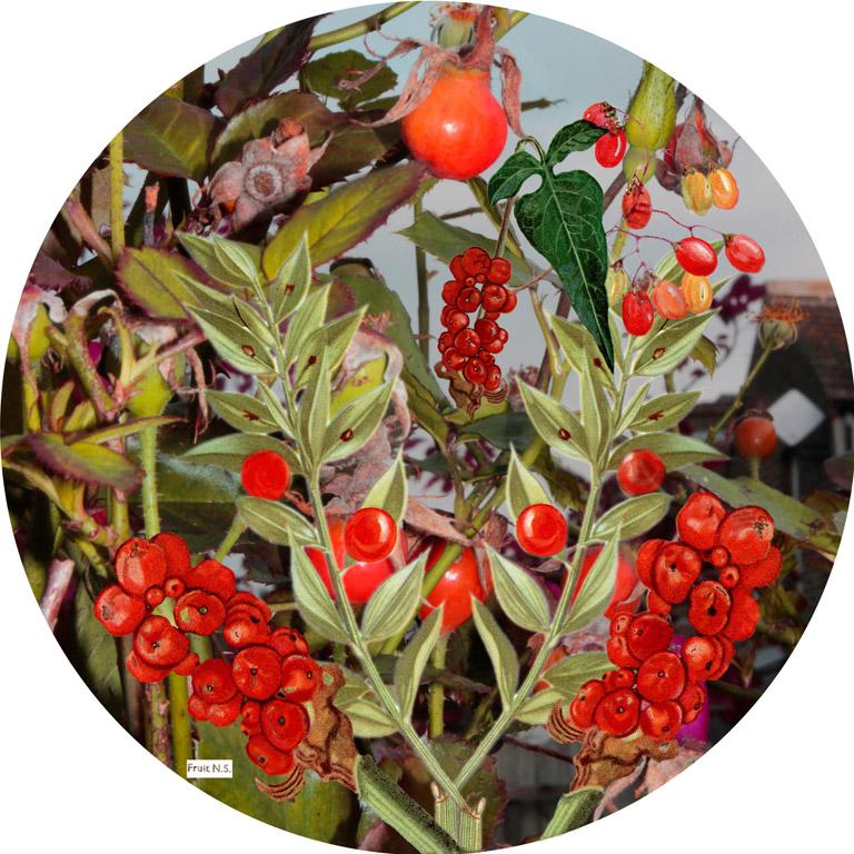 Flora sphere 4 print acrylic internet